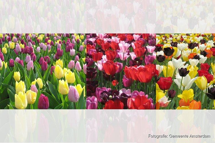 Tulp Festival gaat zondag 1 april weer van start!