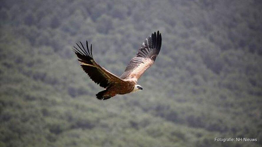 Vale gieren uit Artis vliegen vrijheid tegemoet