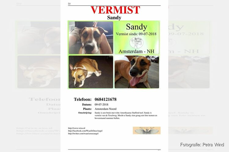 Hond Sandy weggelopen na overlijden baasje: familie mist haar enorm