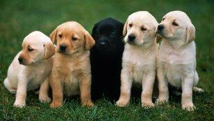 Amsterdamse RAI verandert in gigantische hondenkennel