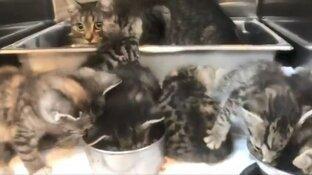 Zes kittens en moederpoes gedumpt bij tankstation