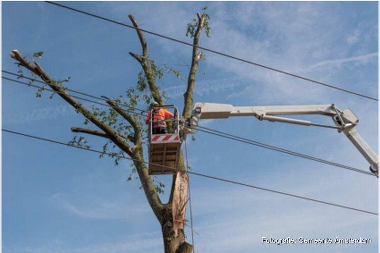 Tweede leven voor hout van gekapte Amsterdamse bomen