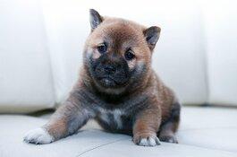 Puppy's moeten Amsterdamse studenten van examenstress afhelpen