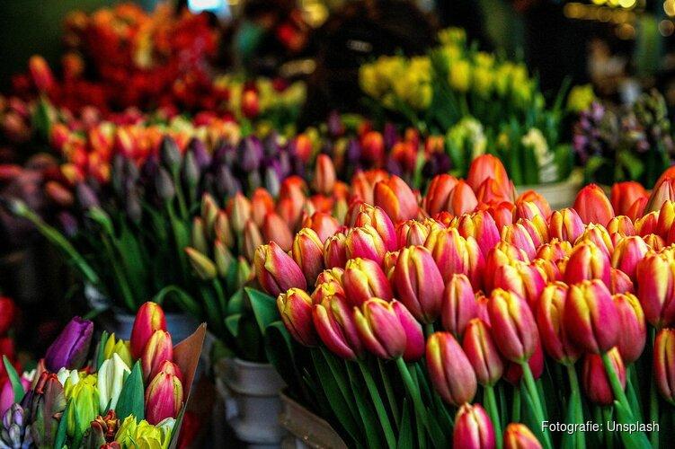 Tulp Festival zet Amsterdam in april in bloei