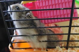Hamster met kooi en al bij het vuil gedumpt