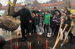 Amsterdam deelt bomen uit voor een groenere stad
