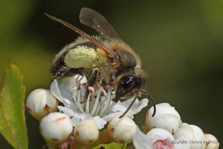 Bloeiende bermen voor bijen A5 Amsterdam West