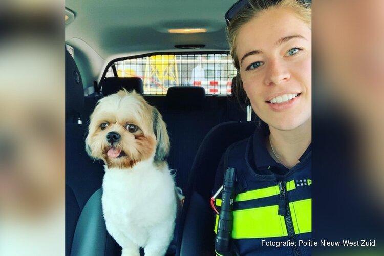 Politie Amsterdam bevrijdt hond uit snikhete auto