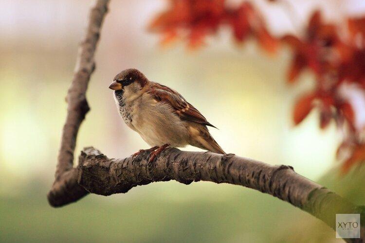 'Vogels rondom vliegvelden zijn doof en agressief'