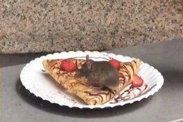 Snoepende muis op pannenkoek betekent sluiting 'Nutella-winkel' Amsterdam