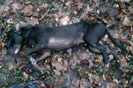 Getuigen gezocht: dode hond aangetroffen in W.H. Vliegenbos