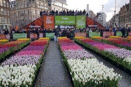 Grote belangstelling voor tulpenpluktuin op de Dam