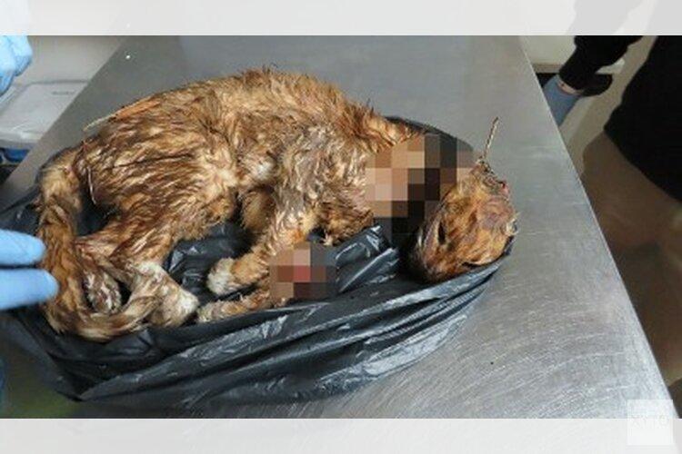 Onthoofde kat aangetroffen: getuigen gezocht