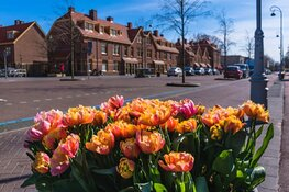 Tulp Festival brengt saluut aan Amsterdammers in buurten en wijken