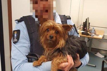 Marechaussee vindt gedumpt hondje in prullenbak op Schiphol