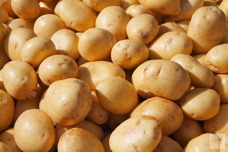 Aardappelberg uitgestort over NDSM-werf, Amsterdammers kunnen tas vullen