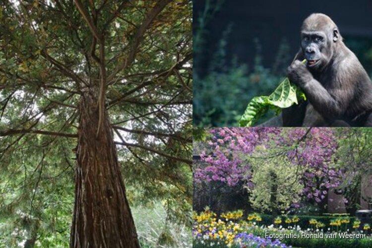 ARTIS officieel botanische tuin