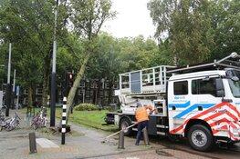 Boom valt om tegen bovenleiding van tram